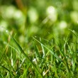 Grass and frash dew in the sunny morning time — Stock Photo