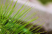 Beautiful abstract plant — Stock Photo