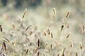 Autumn grass and Idylic frash morning scene — Stock Photo