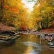 Stock Photo: Autumn landscape width trees stones river and fallen leaves
