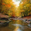 Autumn landscape width trees stones river and fallen leaves — Stock Photo
