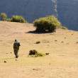 Simien Mountains ranger — Stock Photo