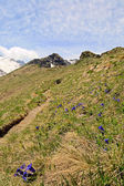 Alpine colors in spring — Stock Photo