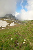 Alpine colors in summer — Stock Photo