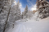 Winter time in the Alps. — Stock Photo