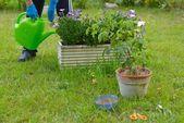 Home gardening — Stock Photo
