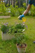Pesticide spray — Stock Photo
