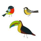 Set birds bullfinch, sparrow, parrot vector — Stock Vector