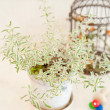 Potted plant - Foto Stock