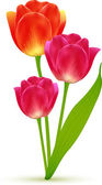 Vector isolated beautiful tulip flowers bouquet — Vector de stock