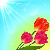 Vector sunny tulip flowers bouquet card template — Stock Vector