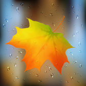 Autumn orange vector leaf on wet glass — Stock Vector