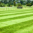 Stock Photo: Horseracing track