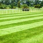 Horseracing track — Stock Photo #16850945