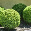 Stock Photo: Bushes