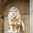 Lion — Stock Photo #16852921