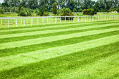 Horseracing track — Stock Photo