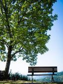 Park bankında — Stok fotoğraf