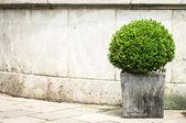 Small bush — Stock Photo