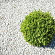 Small bush — Stock Photo #18905879