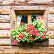 Window - Stockfoto