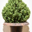 Stock Photo: Small bush
