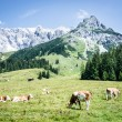 Dolomites — Stock Photo #19459543