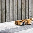 Waiting dog — Stockfoto