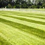 Horseracing track — Stock Photo #19916289