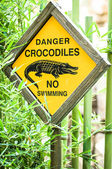 Danger - crocodiles — Stock Photo
