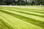 Horseracing track — Stock Photo