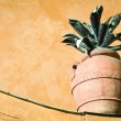 Potted plant — Stock Photo