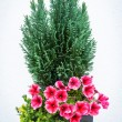 Bouquet — Stock Photo #22642189