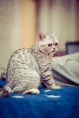 Katzen — Stockfoto