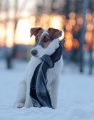 Dogs — Stock Photo