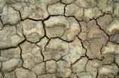 Dry cracked soil texture — Stock Photo