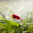 Rainy flower — Stockfoto