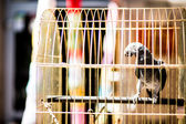 Colorful parrot in a cage — Stock Photo
