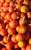 Hokkaido Pumpkins — Stock Photo