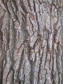 The bark of the tree — Stock Photo