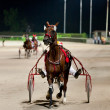 Training trotters race in hippodrome - Stock Photo