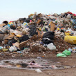 Stock Photo: Birds and dogs on landfill
