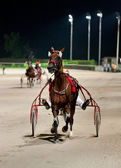 Training trotters race in hippodrome — Stock Photo