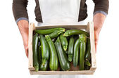 Freshly picked zucchini — Stock Photo