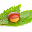 Chestnut on green leaves — Stock Photo