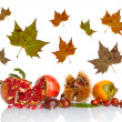 Autumn Fruits - Stock Photo