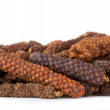 Long pepper or Piper longum - Stock Photo