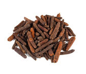 Long pepper or Piper longum — Stock Photo