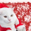 White Cat — Stock Photo #26079083