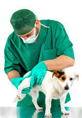 Veterinarian examines the dog's hip — Stock Photo